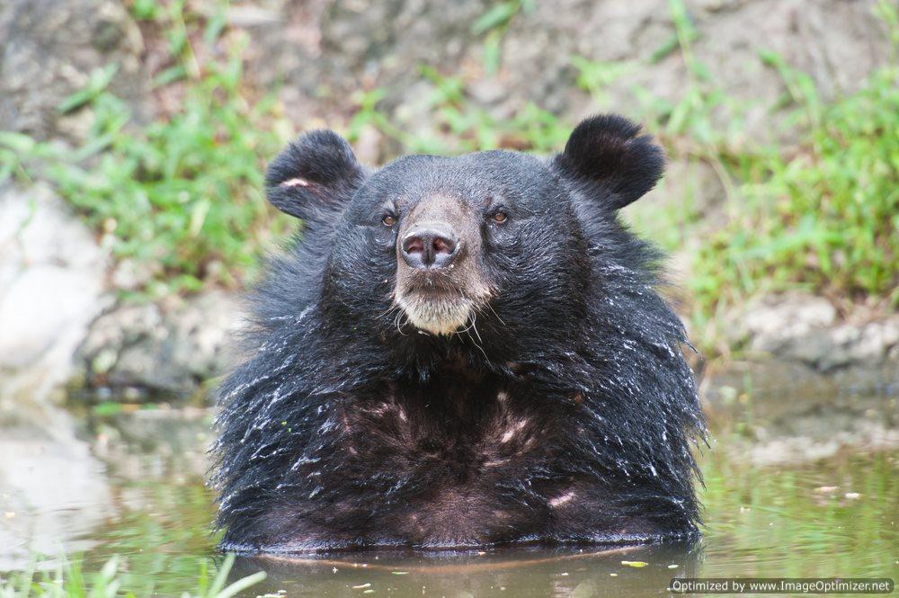 Owner of Killer Bear Dies in Freak Accident