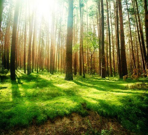 Illegal Logging of Lumber or Timber