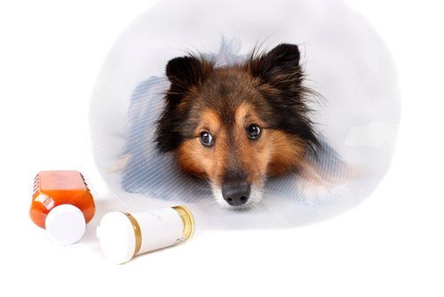 Take Steps to Avoid Pet Medication Errors